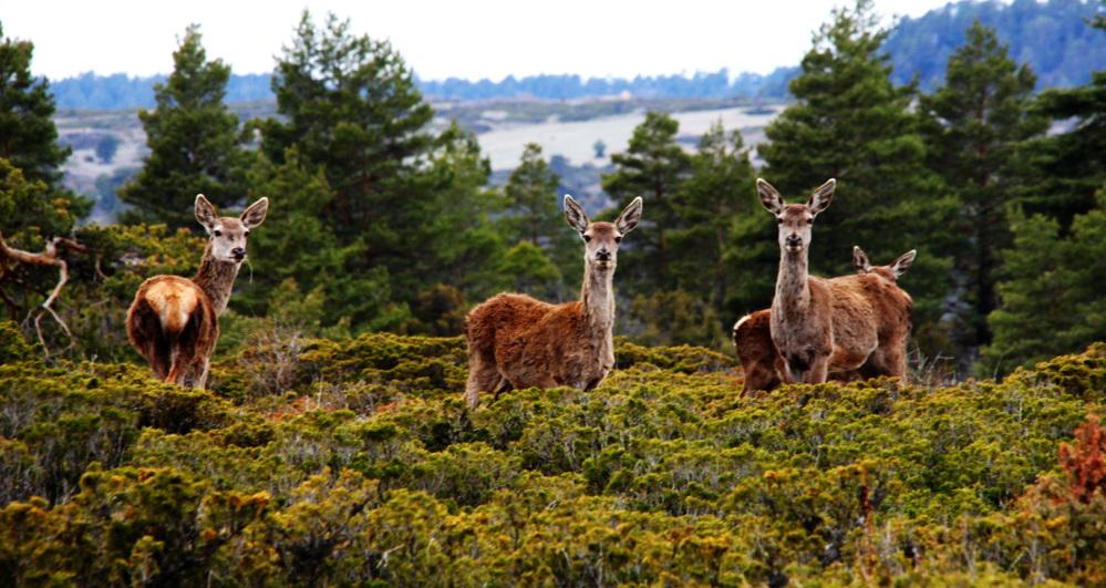 casachon-alto-tajo-paisajes2_exposure