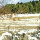 nieve-peralejos-de-las-truchas3