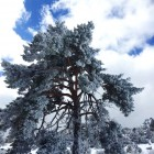 nieve-peralejos-de-las-truchas9