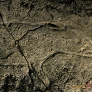 Los Casares Caves. Guadalajara. Prehistoric art. Paleolithic rock engraving.