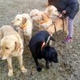 Casas rurales que admiten perros en el Alto Tajo – Guadalajara
