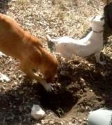 fotos-post-perros2