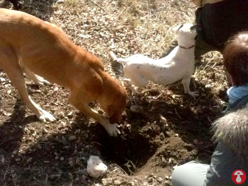 Casa Rural con mascotas. Perros Truferos