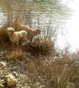 fotos-post-perros3