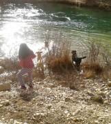 fotos-post-perros4
