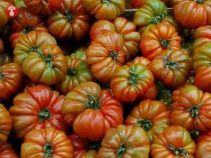 casa-chon-pan-con-tomate (2)