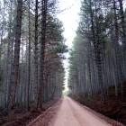 dia-del-bosque-chon1