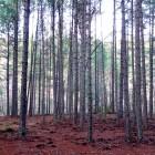 dia-del-bosque-chon2
